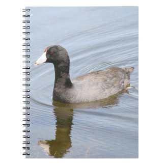 American Coot Spiral Photo Notebook