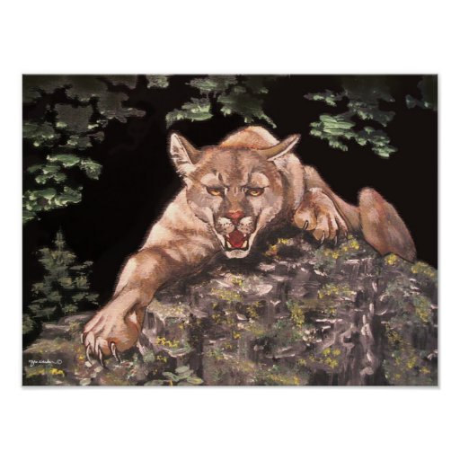 American Cougar poster