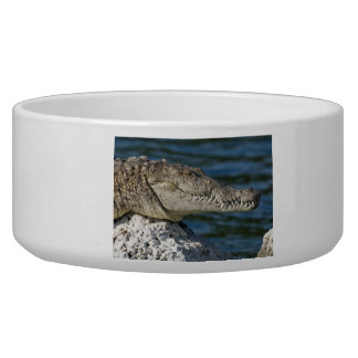 American Crocodile Pet Water Bowls