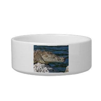 American Crocodile Cat Water Bowls