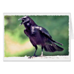 American Crow Cards