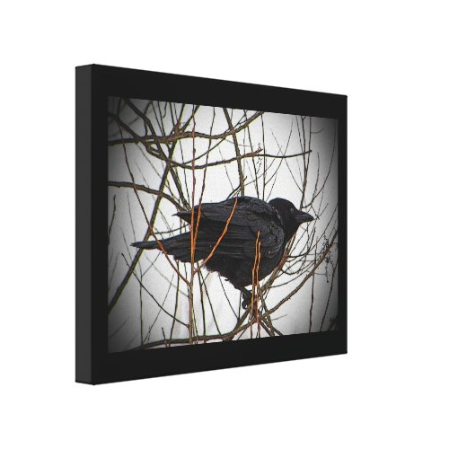 American Crow Gallery Wrapped Canvas