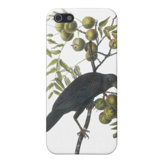 American Crow, John James Audubon iPhone 5 Case