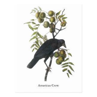 American Crow, John James Audubon Postcard