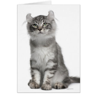 American Curl Kitten (3 months old) Card