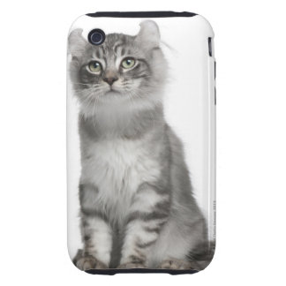 American Curl Kitten (3 months old) Tough iPhone 3 Cases