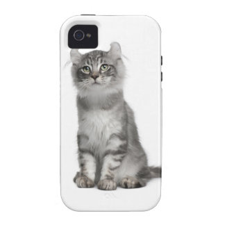 American Curl Kitten (3 months old) iPhone 4 Covers