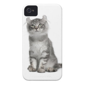 American Curl Kitten (3 months old) iPhone 4 Case-Mate Cases