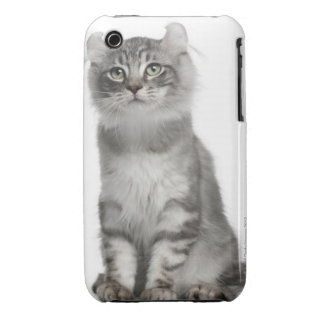 American Curl Kitten (3 months old) Case-Mate iPhone 3 Case