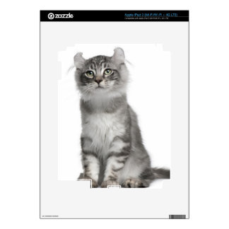 American Curl Kitten (3 months old) iPad 3 Skin