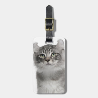 American Curl Kitten (3 months old) Luggage Tag