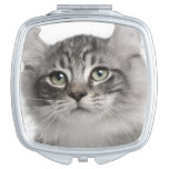 American Curl Kitten (3 months old) Makeup Mirror