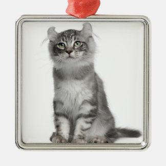 American Curl Kitten (3 months old) Metal Ornament