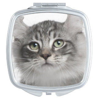 American Curl Kitten (3 months old) Mirror For Makeup