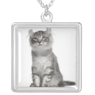 American Curl Kitten (3 months old) Silver Plated Necklace