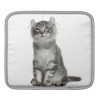 American Curl Kitten (3 months old) Sleeve For iPads