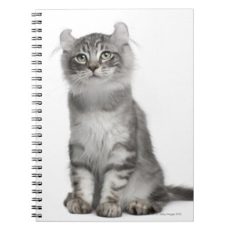 American Curl Kitten (3 months old) Spiral Notebook