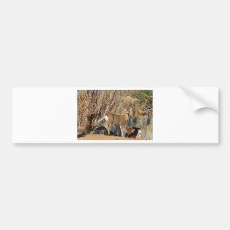American Deer Collection Bumper Sticker
