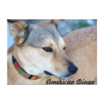 American Dingo Stamps Stretched Canvas Prints