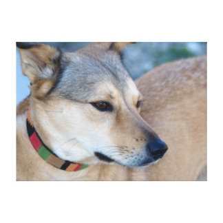 American Dingo Wall Canvas Print