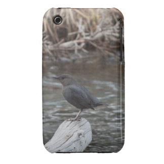 American Dipper iPhone 3 Case-Mate Cases