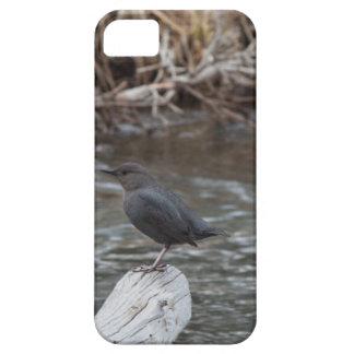 American Dipper iPhone SE/5/5s Case