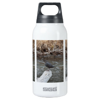 American Dipper Thermos Water Bottle