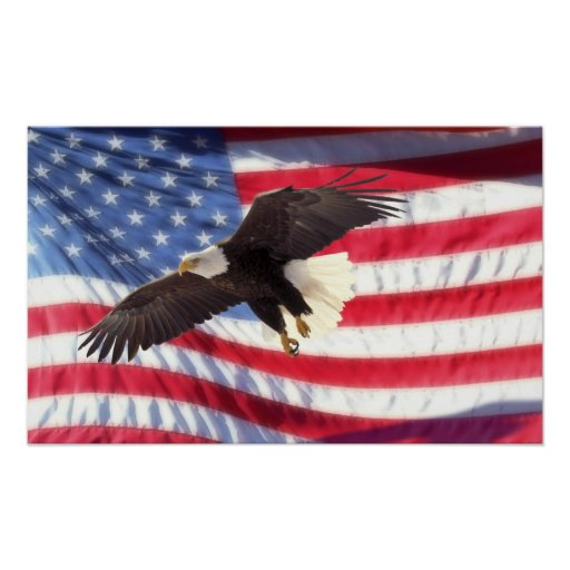 american eagle and flag poster