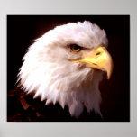 American Eagle Bald Eagle Poster Print