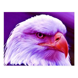 American Eagle calvo Postales