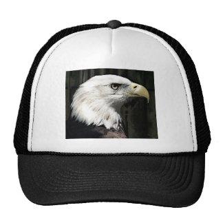 American Eagle Gorra