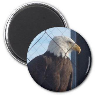 American Eagle Refrigerator Magnet