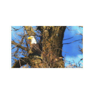 American Eagle Stretched Canvas Prints