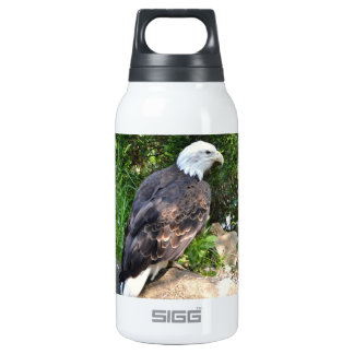 - American Eagle Thermos Water Bottle