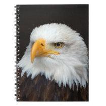 AMERICAN EAGLE - WEIS HEAD SEA-EAGLES by Glineur Notebook