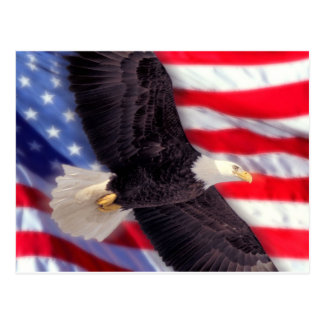 American Eagle with American Flag Postcard