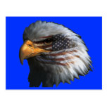 American Eagle with Flag Post Card