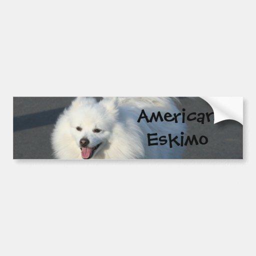 American Eskimo Car Bumper Sticker