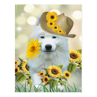 American Eskimo Daisy Postcard