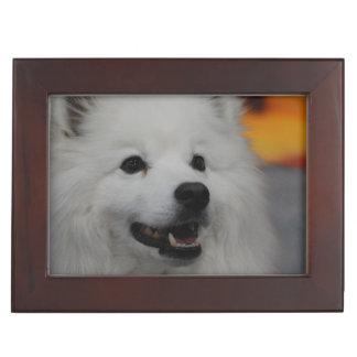 american-eskimo-dog-2.jpg cajas de recuerdos