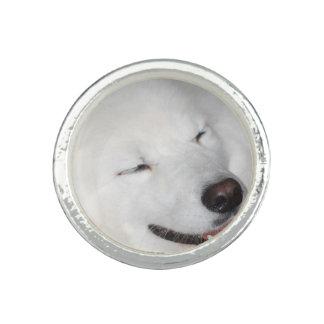 american-eskimo-dog-5.jpg anillos