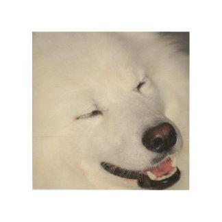 american-eskimo-dog-5.jpg cuadro de madera