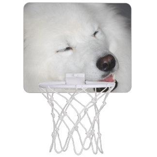 american-eskimo-dog-5.jpg minicanasta