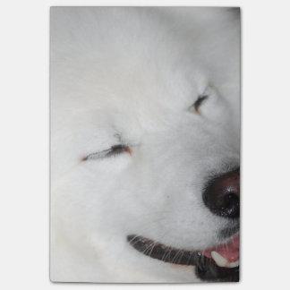 american-eskimo-dog-5.jpg post-it notas