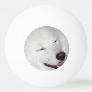american-eskimo-dog-5.jpg pelota de tenis de mesa