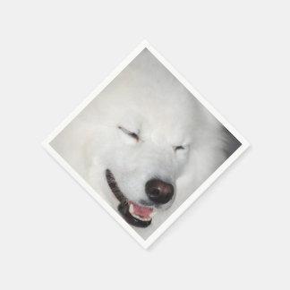 american-eskimo-dog-5.jpg servilletas de papel