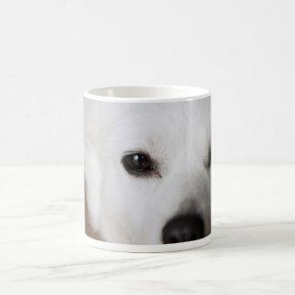 American Eskimo Dog Face 2 Coffee Mug
