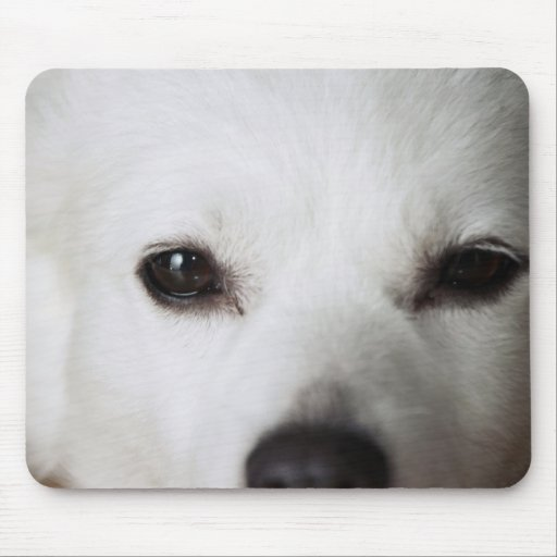 American Eskimo Dog Face 2 Mouse Pads