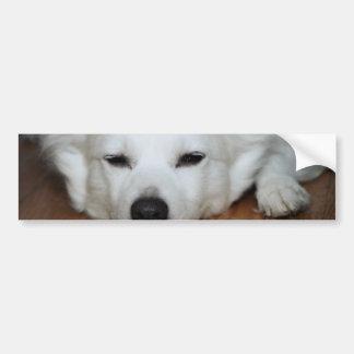 American Eskimo Dog Face Bumper Sticker