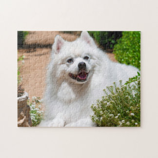 American Eskimo dog lying on garden path Jigsaw Puzzle